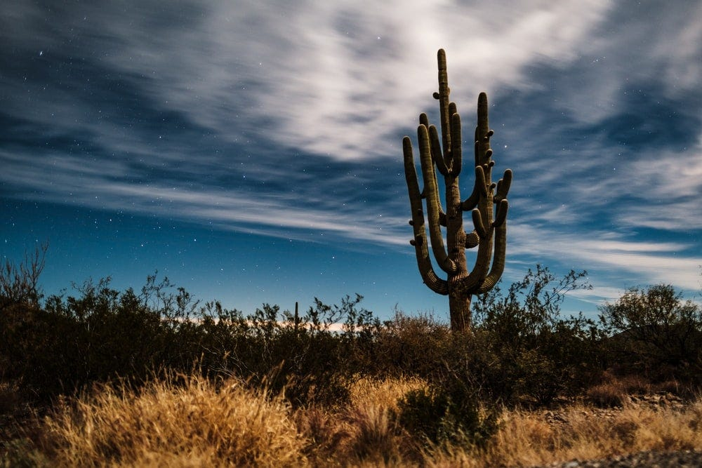 green cactus under white clouds