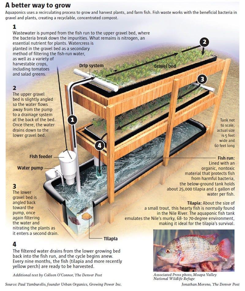 Reciruculating Aquaponics
