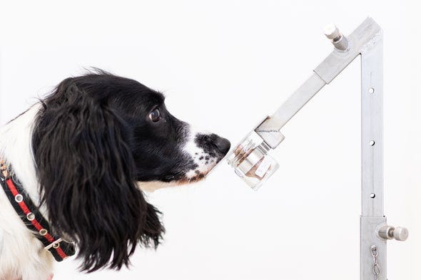 AI System Can Sniff Out Disease as Well as Dogs Do