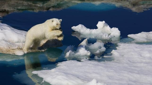 header-polarbears
