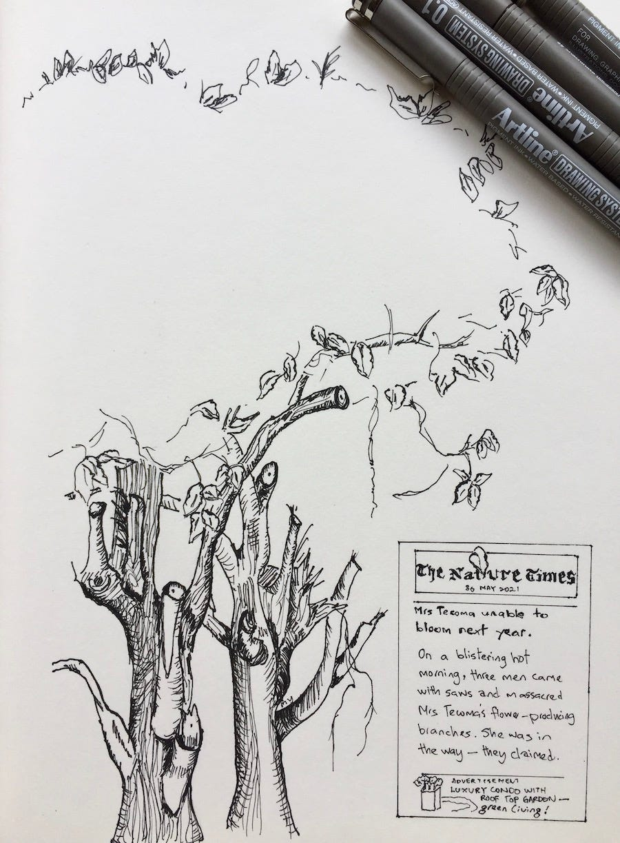 Black & white ink drawing (line drawing) of a Tacoma tree with some branches cut off. This is a message of creation care. There's a spoof newspaper cover with the masthead The Nature Times. The headline reads: Mrs Tecoma unable to bloom next year. The content reads: On a blistering hot morning, three men came with saws and massacred Mrs Tecoma's flower-producing branches. She was in the way; they claimed.