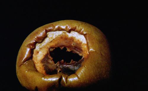 imagem da maçã em estado avançado de decomposição, disforme e escura