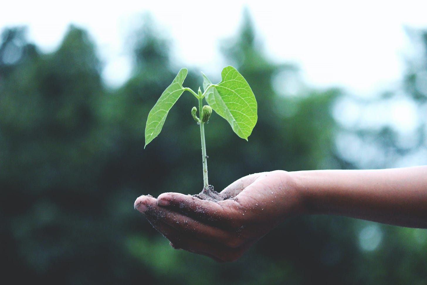 baby tree growing in a hand
