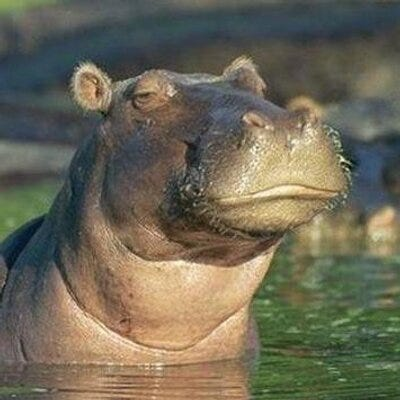 Skeptical Hippo (@sceptical_hippo)   Twitter