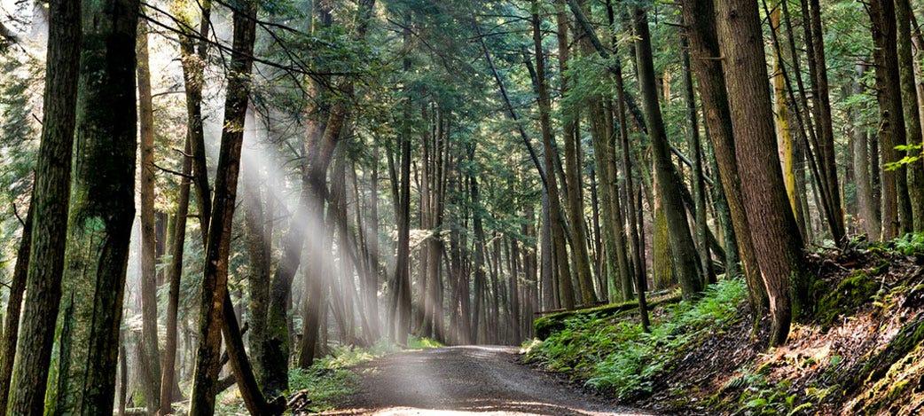 Image result for cook forest state park