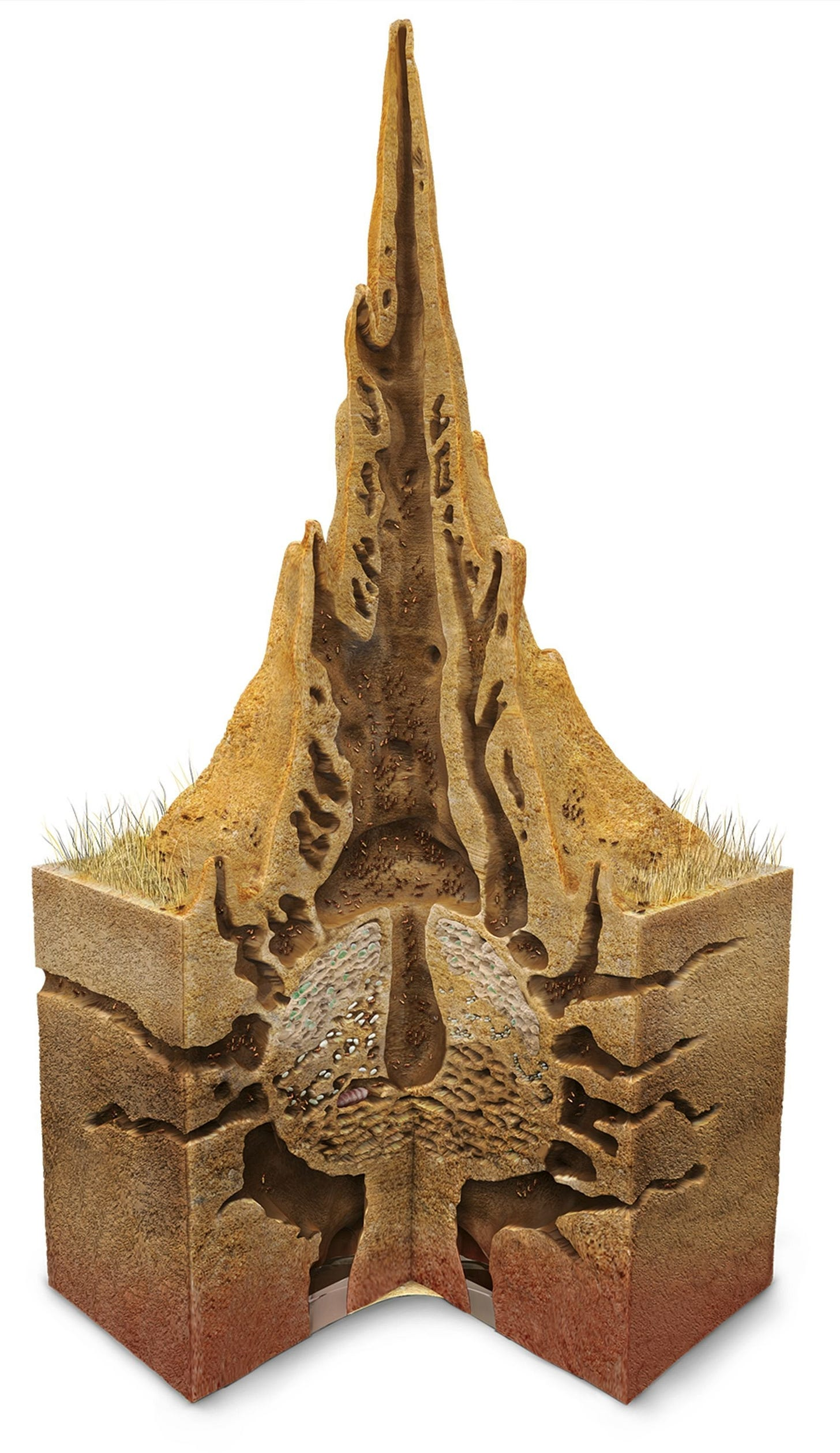 termite mound cross-section image