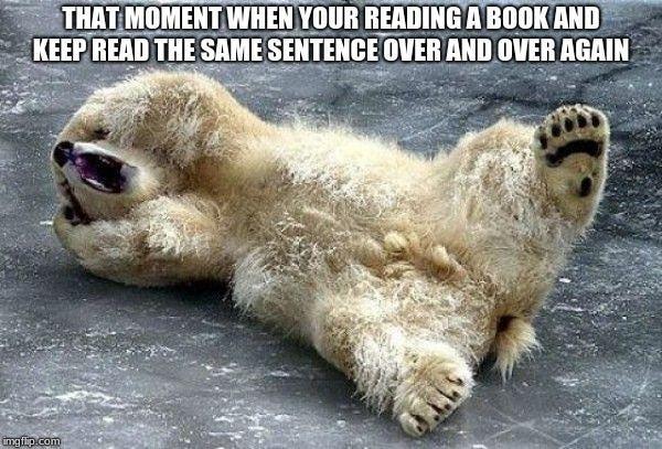 Oh nooo polar bear - Imgflip