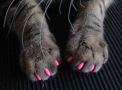 cat nail polish sushisu | Soft paws, Cat claw covers, Cat nails