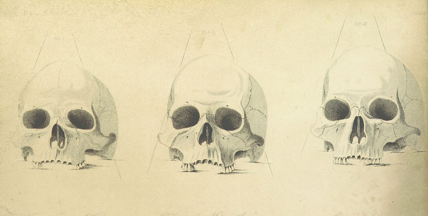 Pencil sketch of three skulls