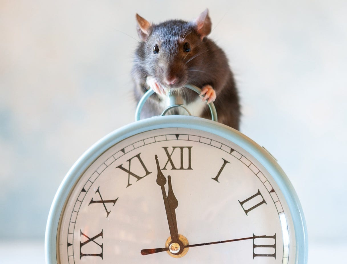 Mouse on alarm clock