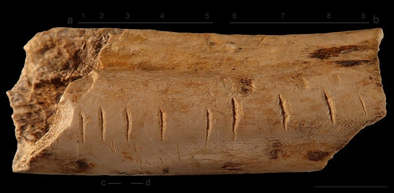 Hyena bone from Les Pradelles with notches