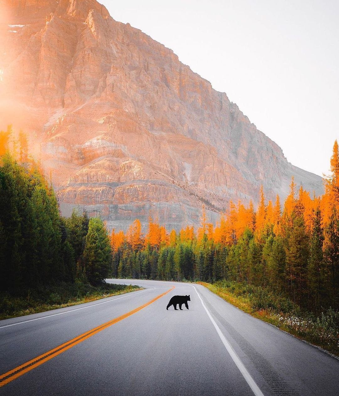 landscape of mountains on bear on road