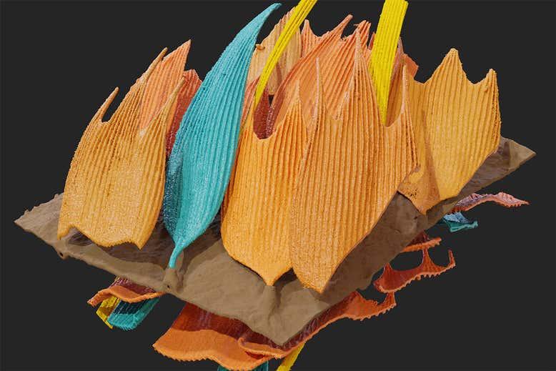 https://images.newscientist.com/wp-content/uploads/2020/11/23145839/moth-scales_web.jpg?width=778