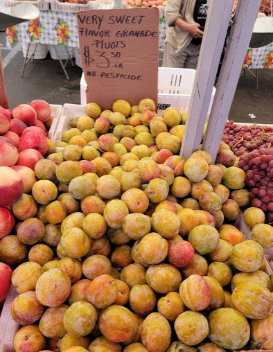 """Baskets overflowing with bright yellow-green stone fruit and a cardboard sign that says """"very sweet flavor granade pluots"""" $3.50 per pound no pesticides"""