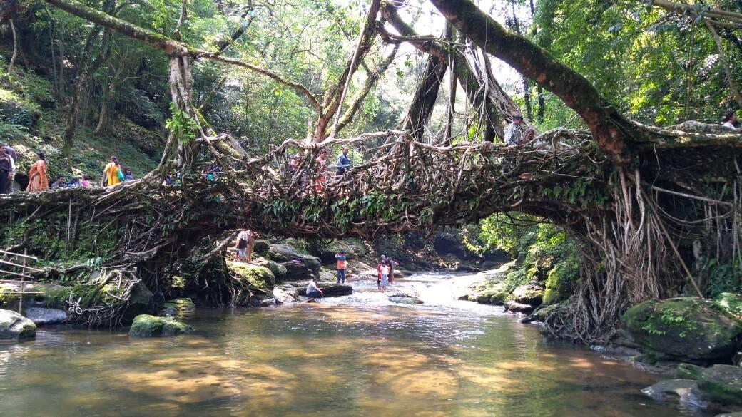 File:The Living root bridge in Dawki, Meghalaya.jpg - Wikimedia Commons