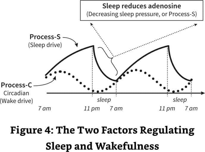 why-we-sleep-summary-process-c-and-process-s - Integrated Health Solution