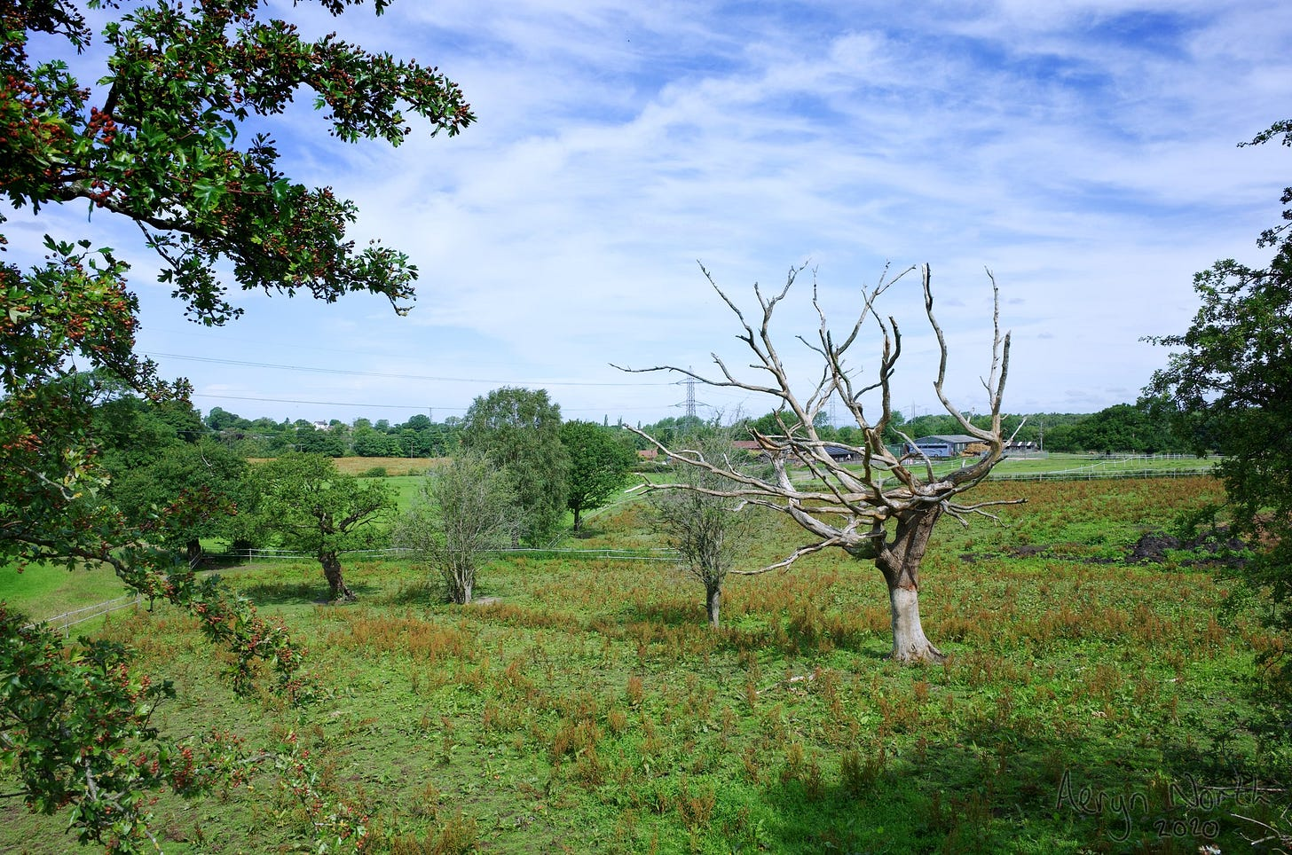 20200712-1024-01-dead-tree-macclesfield-canal-by-Aeryn-North.jpg