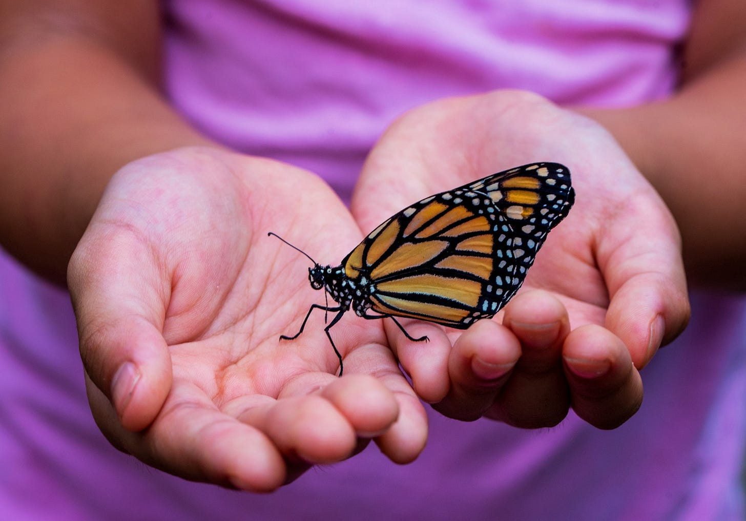 This child was delighted when a butterfly landed in her hands.