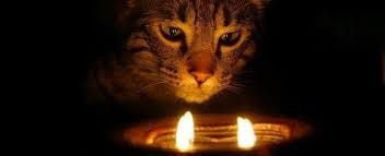 Help Your Cat Survive a House Fire