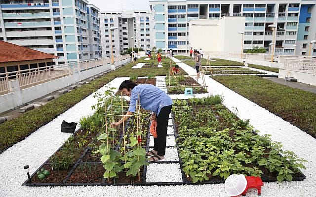 Residents tending vegetable crops on a rooftop community garden in Yishun, Singapore