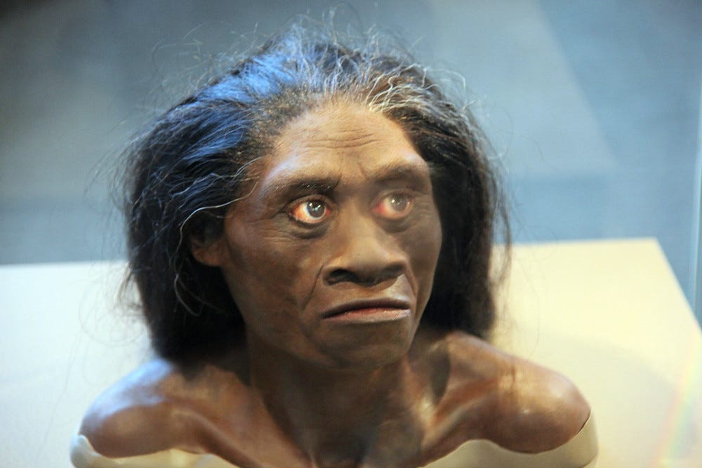 Homo floresiensis adult female - model of head - Smithsoni… | Flickr