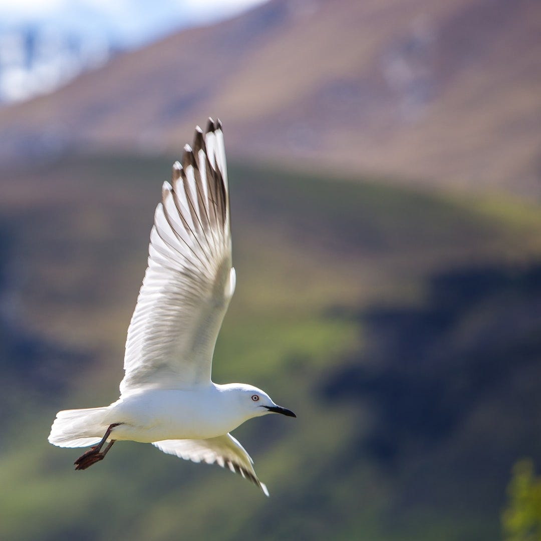 shallow focus photography of white bird flying in the sky photo – Free Bird  Image on Unsplash
