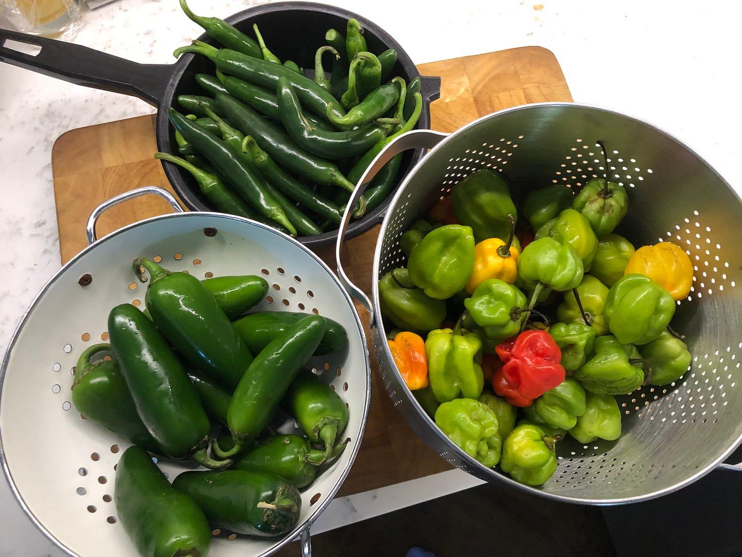 Three colanders holding Serrano, Habanero, and Jalapeño peppers
