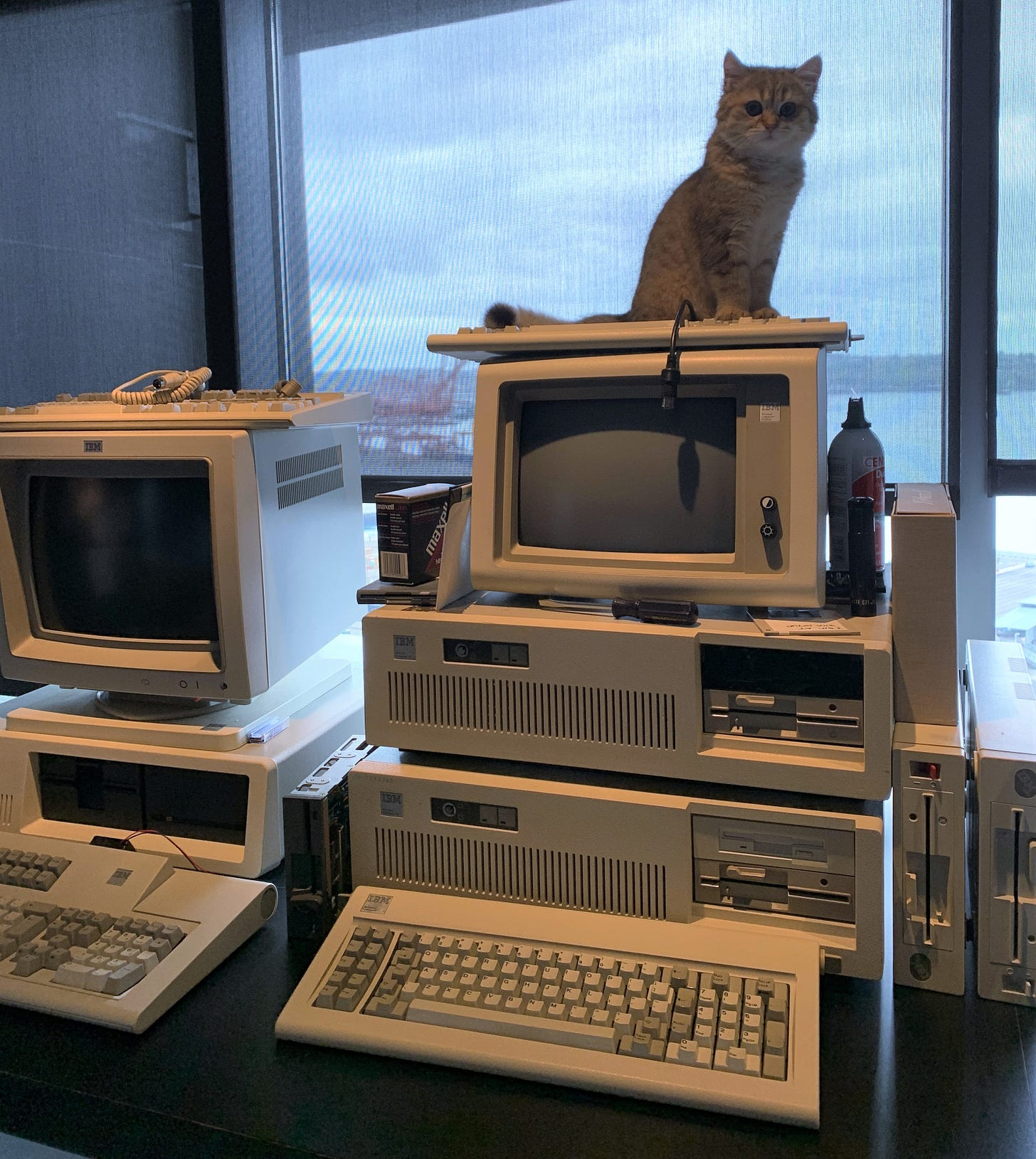 Several IBM PC vintage computers. A small kitten sitting on top of one of the cathode ray tube monitors.