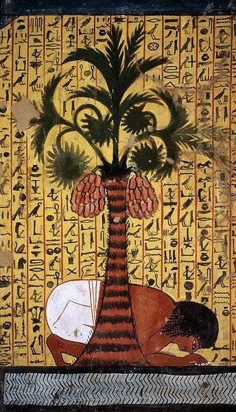 Pashedu Drinking Water Beneath a Palm Tree Laden With Dates -- 13th Century  BCE -- Tomb of Pashedu Deir el …   Ancient egyptian art, Egyptian art,  Egyptian painting