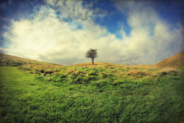 A Hawthorn tree standing alone in the middle of an Irish field