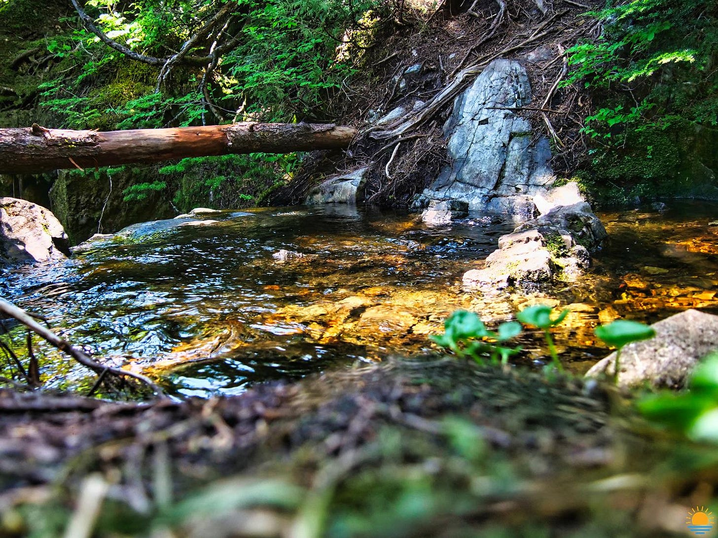 Cool stream on a summer day.