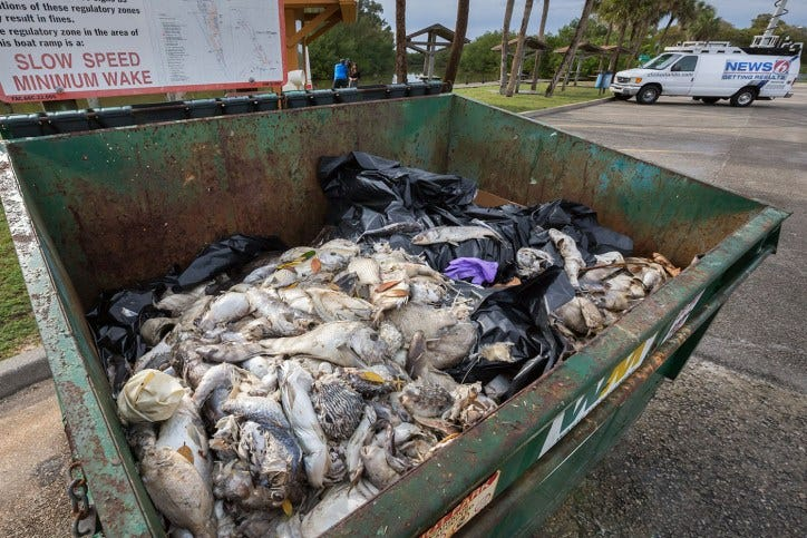 IRL fish kill dumpster.0976 | Jacqui Thurlow-Lippisch