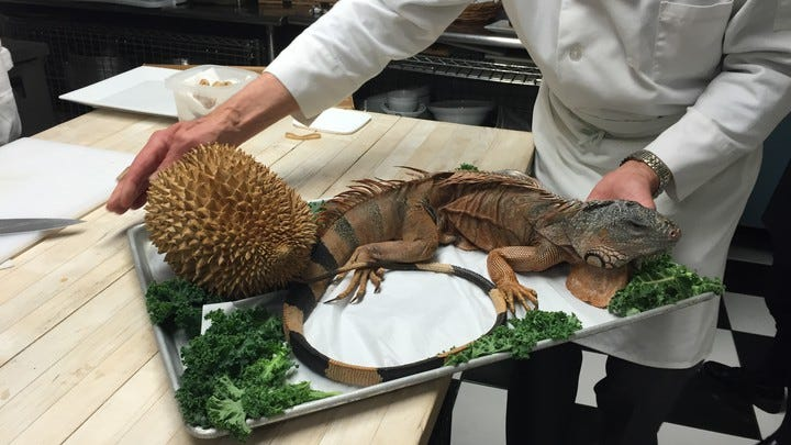 Eating Iguana at the Explorers Club Annual Dinner - The Atlantic