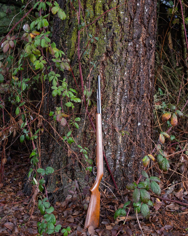 Gun on fir my dad planted fifty years ago