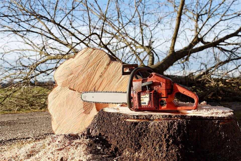 Chainsaw, Tree, Tree Pruning, Forest Work, Saw, Felling