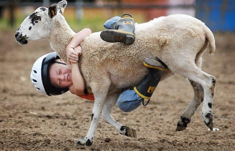 goat rodeo - Dictionary.com