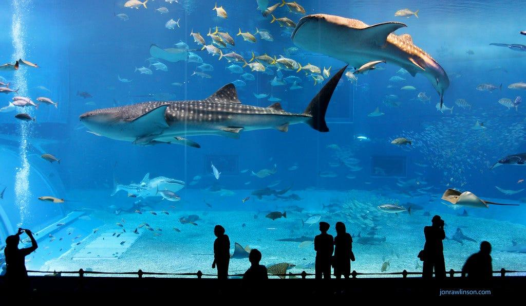 """Kuroshio Sea - 2nd largest aquarium tank in the world"" by jonrawlinson is licensed under CC BY 2.0"