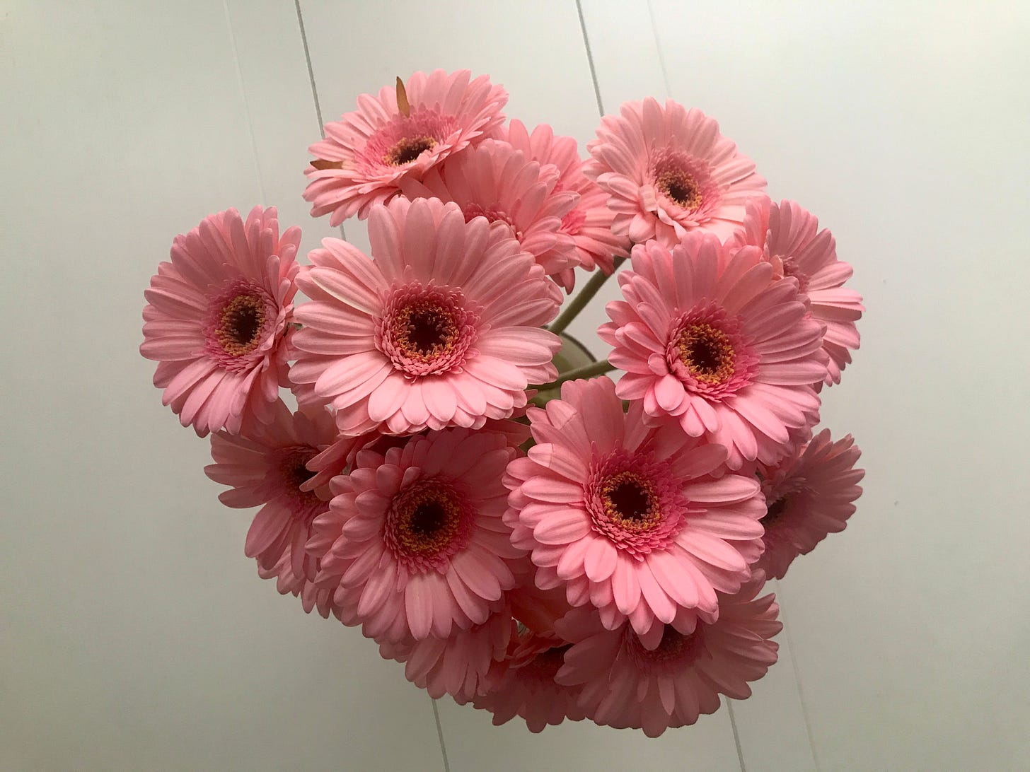 A direct overhead view of a bouquet of large pink daisies in a vase on a white table