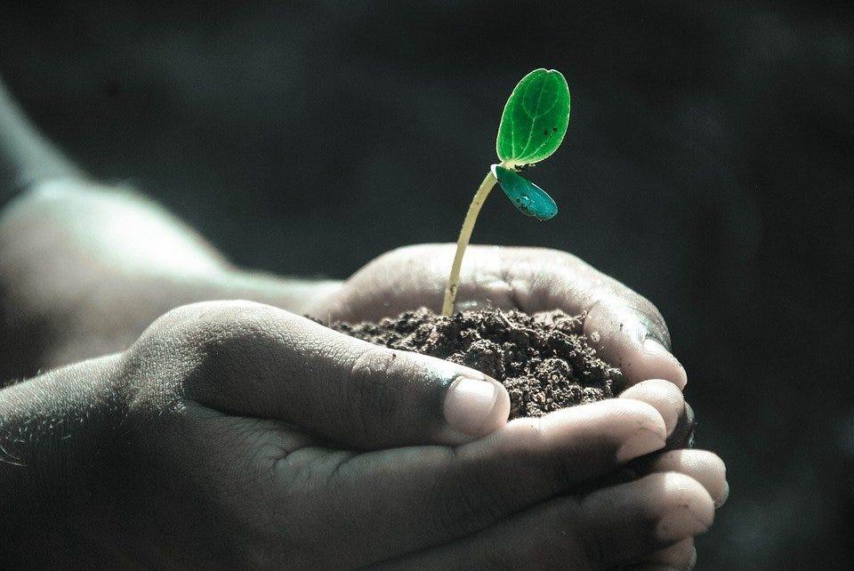 Hands, Macro, Plant, Soil, Grow, Life, Gray Life