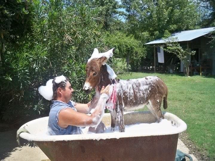 Oh, you know, just taking a bath with my donkey... no big deal.   Cute  donkey, Donkey, Cute funny animals
