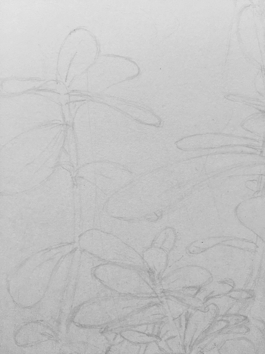 Photo of a work in progress of my artwork. It's zoomed in to the pencil outline of a few leaves.
