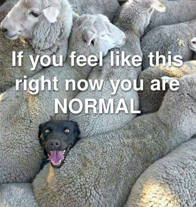 May be an image of animal and text that says 'If you feel like this right now you are NORMAL'