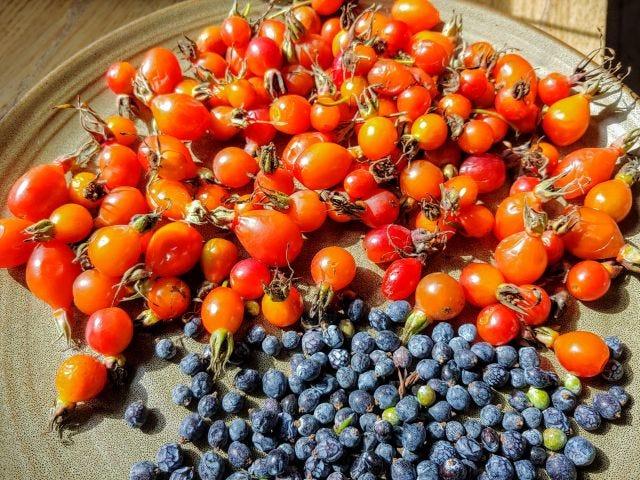Rosehips and juniper berries