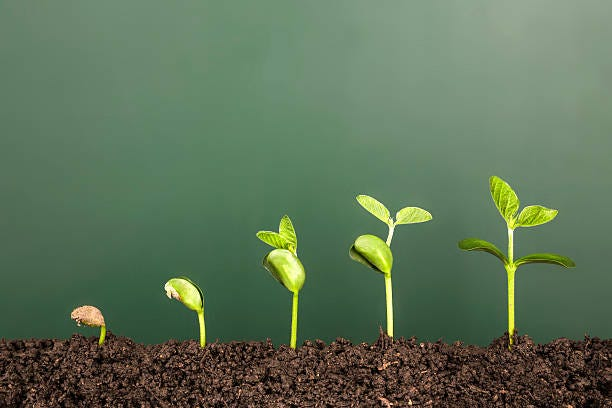 bussiness growth:new life growing before blackboard bussiness growth:new life growing before blackboard Improvement stock pictures, royalty-free photos & images