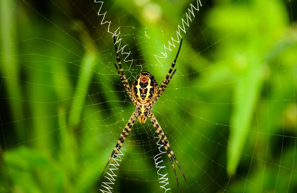 brown and black spider resting at the center of web