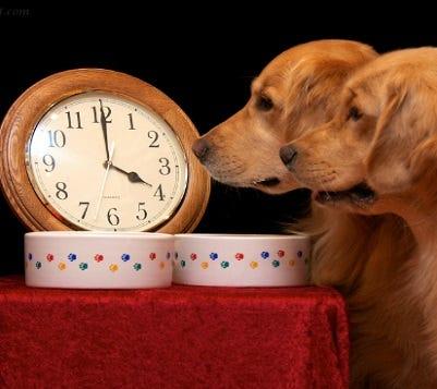 Dog Routine
