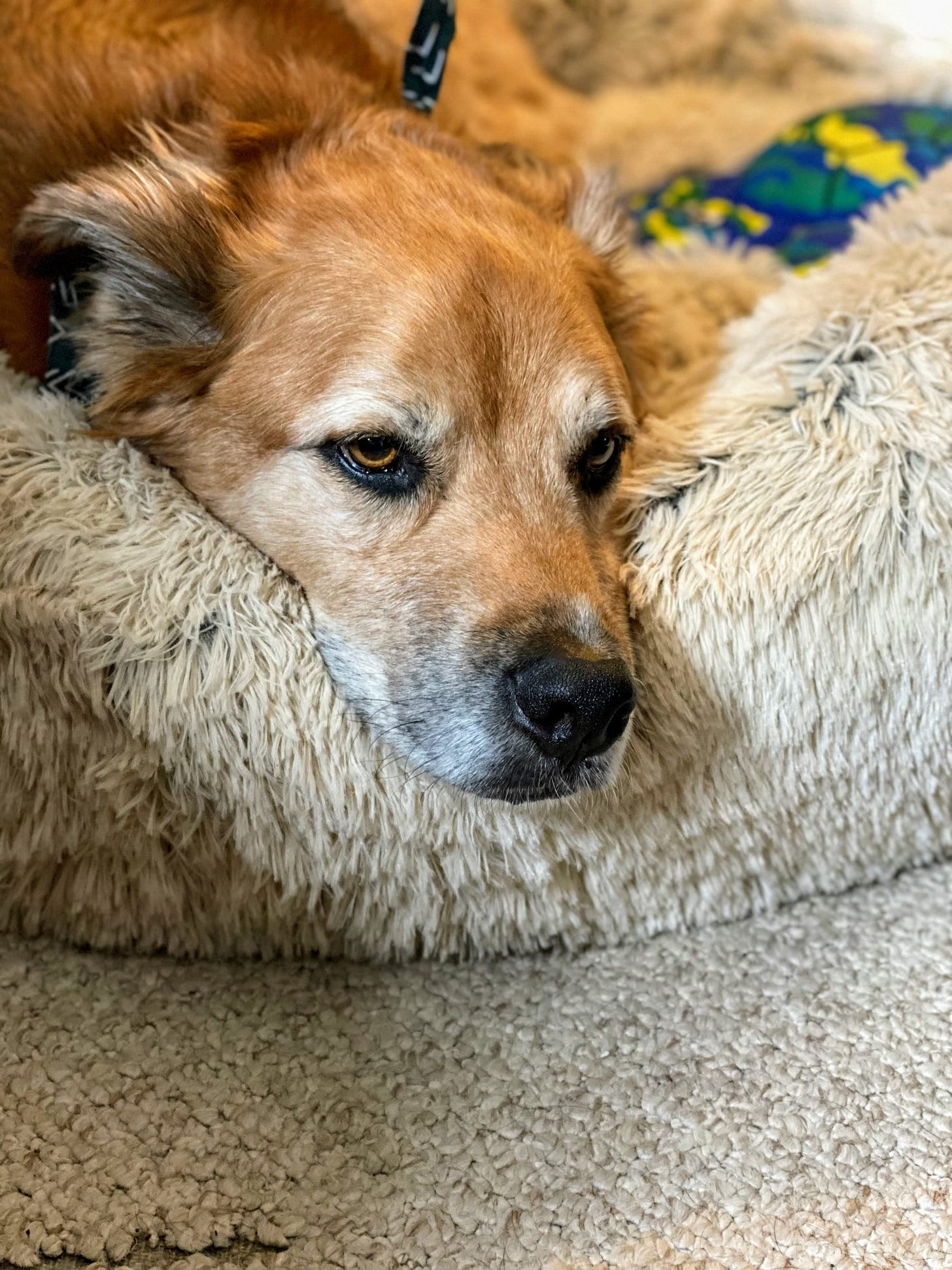New dog bed for Forest! (Photo: Jennifer Roberts)