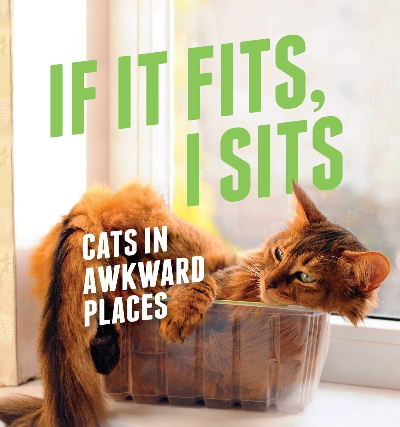 If It Fits, I Sits: Cats in Awkward Places: Various: 9781501134227:  Amazon.com: Books