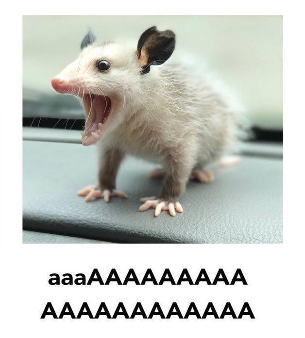 "Spooky possum !! aaa !!! on Twitter: ""Ten days away from ACNH… """