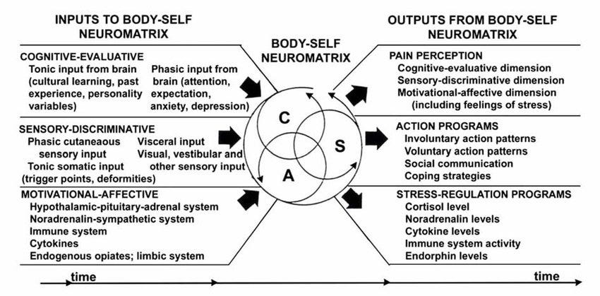 The body self neuromatrix theory. Melzack R. Published in Pain ...